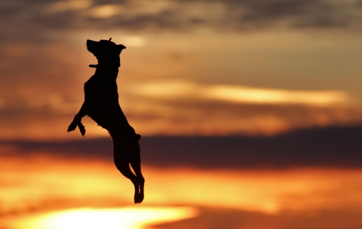 purposefully_lost_dog_jump