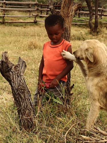 africa_community_outreach_dog_rescue
